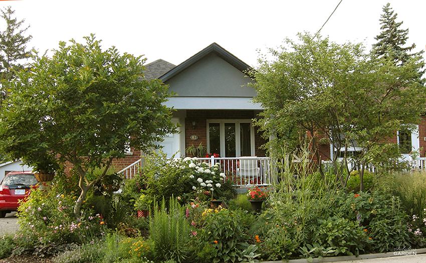 Jennifer's Front Garden