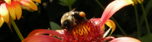 bee on flower on The Fabulous Garden