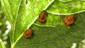 3moreladybug