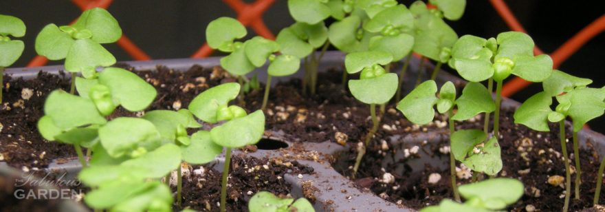 What new gardeners need to hear about starting seeds
