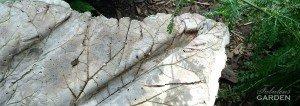 cement cast leaf