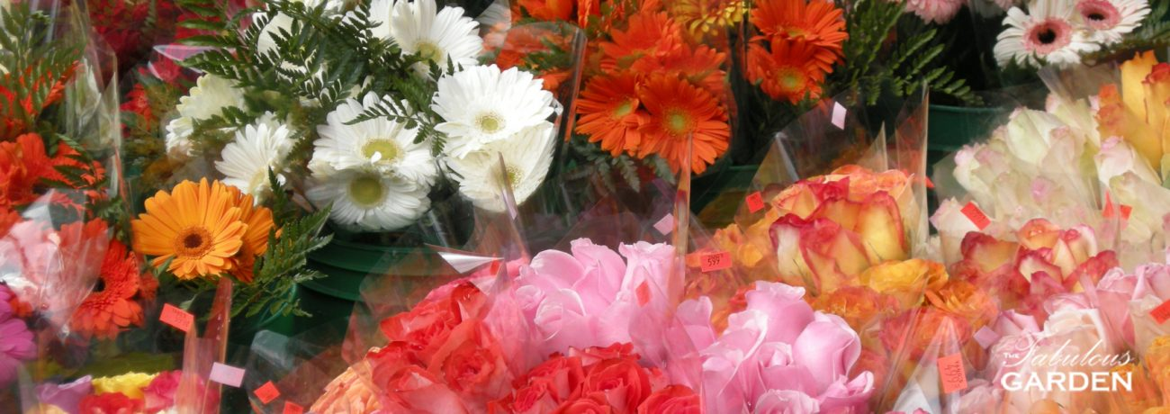 Flowers in flower shop
