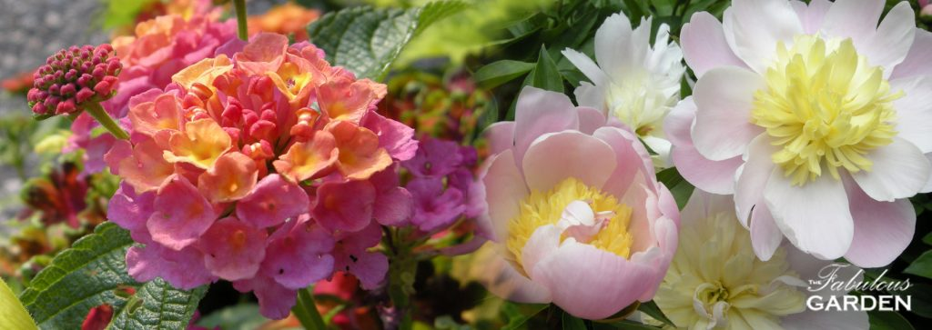annual and perennial flowers with The Fabulous Garden watermark