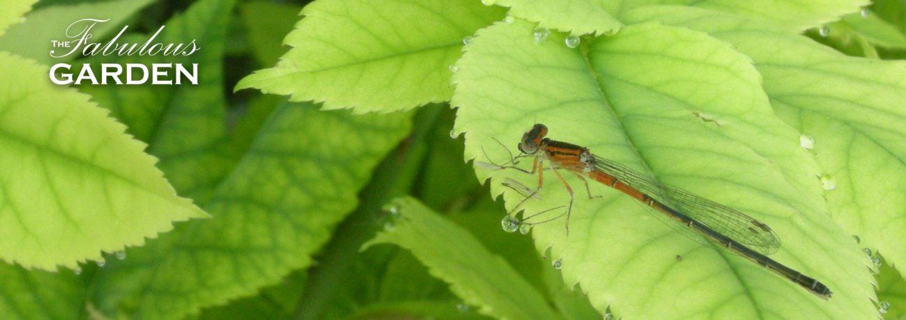 dragonfly on bright green leaf