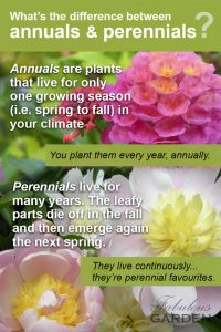 Annual and perennial definitions