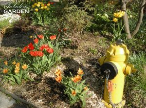 garden bed with yellow fire hydrant