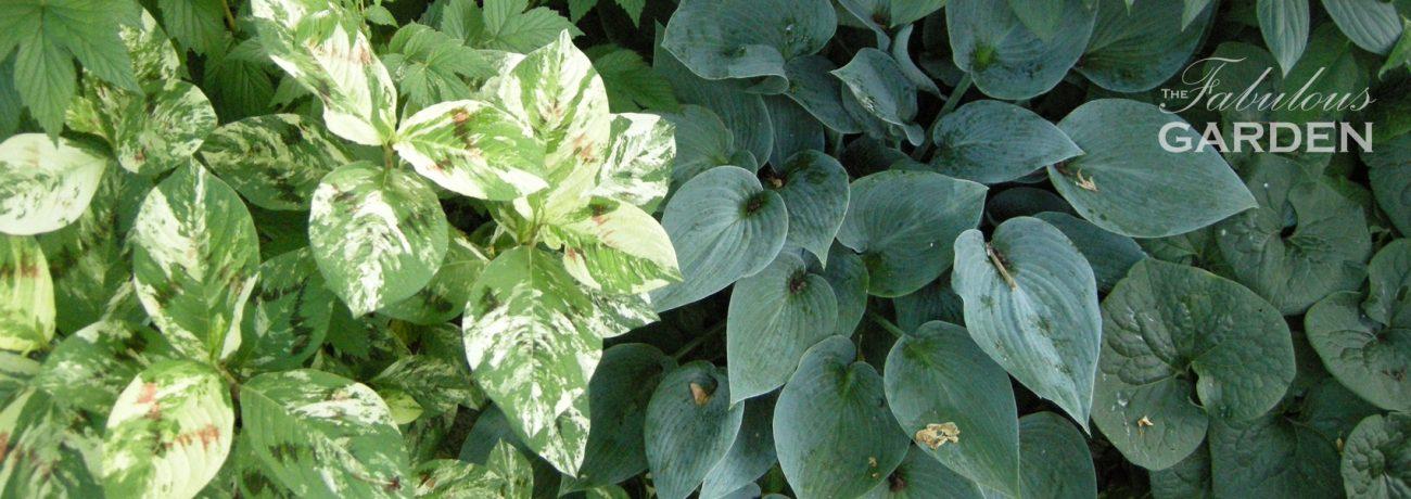 assortment of shade tolerant plants