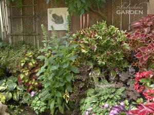 plants along a fence, with coleus