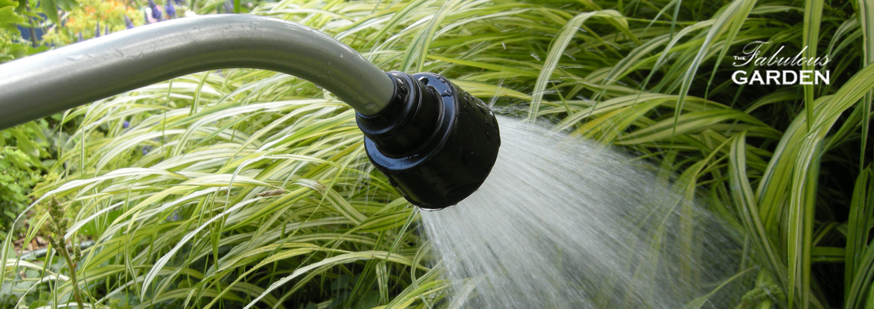 5 Rules for Watering Your Garden