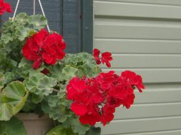 A quick & easy upgrade for hanging baskets