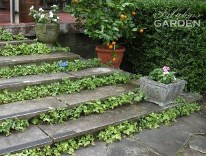 Wild strawberries line these stone steps