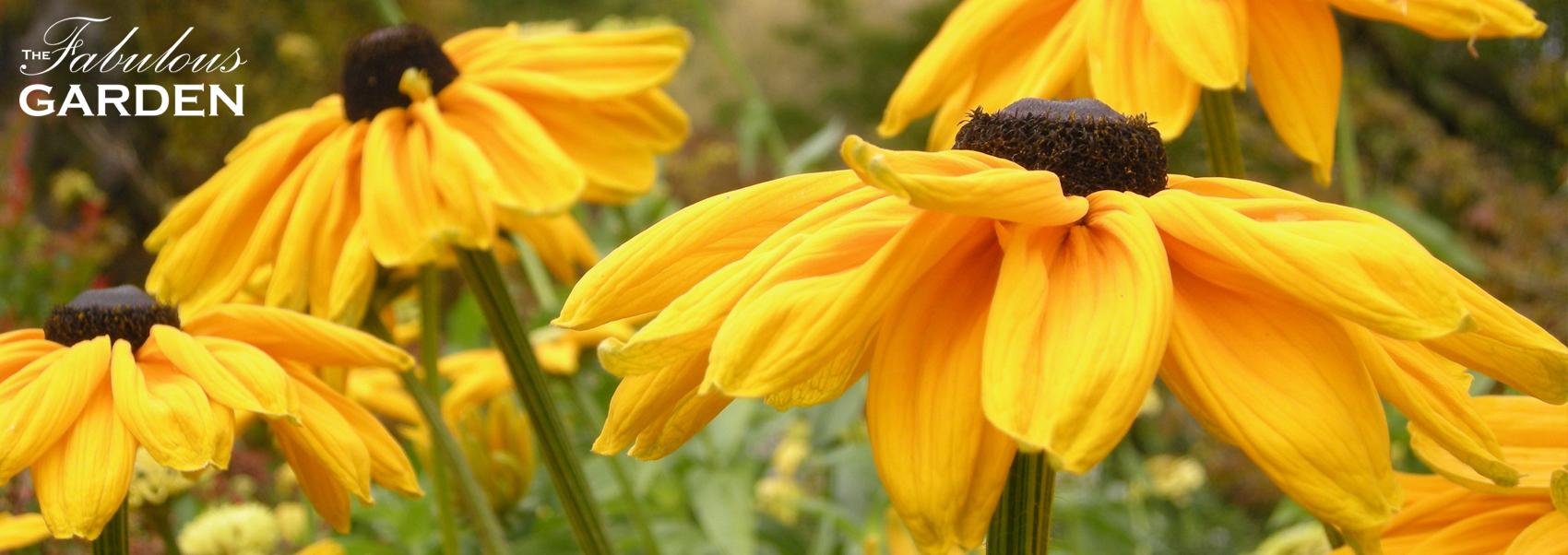 An October Visit to VanDusen Botanical Garden – Part 1