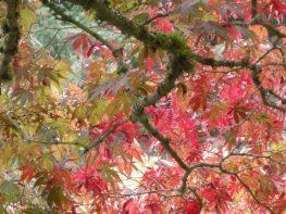 Part 2 – An October Visit to VanDusen Botanical Garden