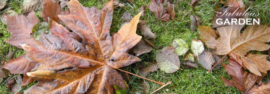 Early fall garden tasks