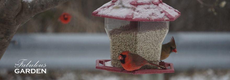 Birdfeeders: what gardeners need to know