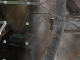 Keeping birds safe from windows