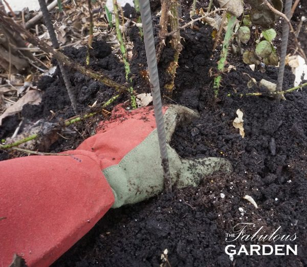 Rose gloves make working around roses less painful