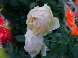 Deadheading makes a difference