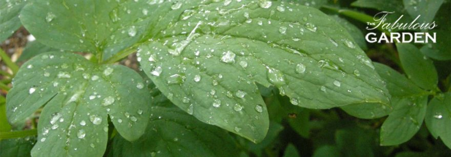 Do you know the dry spots in your garden?