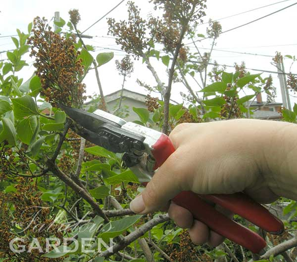 How to chose the right pair of secateurs (aka pruners)