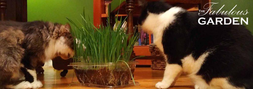 How to Grow Cat Grass