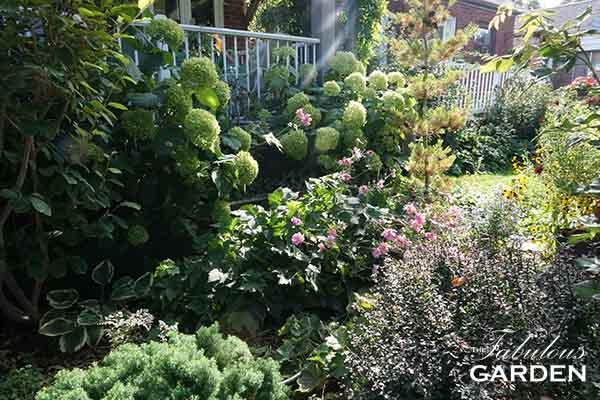 How to Prune Hydrangeas - The Fabulous Garden