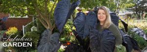 Colocasia Black Coral and the article's author